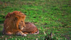 【世界文化遗产】坦桑尼亚8日游【卡塔尔航空/全程越野车/塞伦盖蒂2晚】