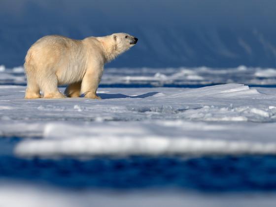 【恋上北极】斯瓦尔巴群岛8日游【破冰船科考/冲锋艇冰川巡游/黄河站/北极徒步】