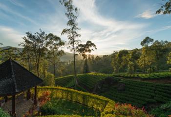 国家地理  斯里兰卡 茶园国度之悠