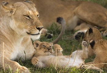 国家地理 东非 我的东非动物日记