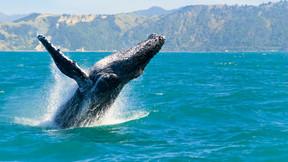 澳大利亚大堡礁 新西兰南北岛纵横穿越21日游【国航直飞 纯玩 美食美酒 凯库拉观鲸 西海岸冰川】