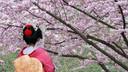"""星梦邮轮""""探索梦号""""天津-福冈-天津 4晚5天游"""