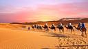【亲子营】【行走的力量】宁夏+中卫亲子游学营5日游【亲子游学乐趣体验/沙漠露营体验/喜来登酒店/宁夏特色美食】