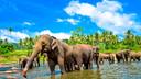 斯里蘭卡跟團游
