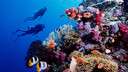 【海洋奇迹】美娜多4晚5日游【白沙岛一日游/班达水上活动中心/布纳肯海洋保护区】
