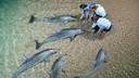 澳大利亚 (凯恩斯+天阁鲁玛海豚岛) 10天 【上海起止/国航/全程4星/喂食野生海豚/大堡礁】
