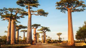 馬達加斯加13日游【熱情之島/內陸雙飛】