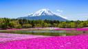 富士山半自助