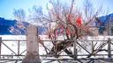 新疆一日游