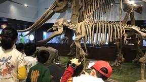【古生物奇妙夜】重返侏罗纪,夜宿博物馆,与恐龙做邻居