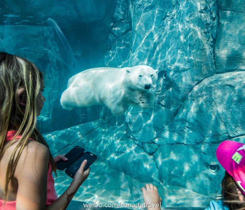 加拿大西北航道——北极探险之旅