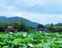 杭州4日游,杭州4日游费用-3分快3 1分快3