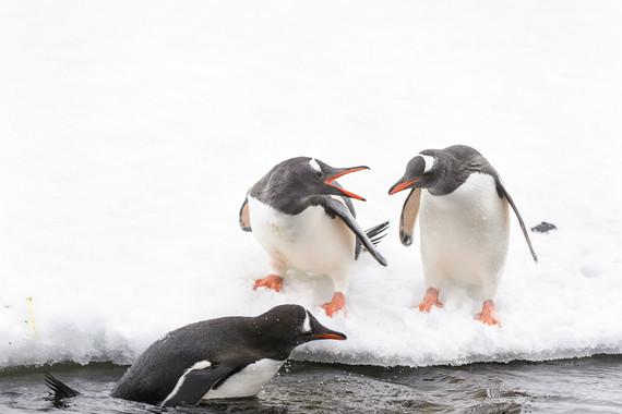 极地-【南极大冒险,华人包船】南极+玻利维亚21-22日游【华人包船/天空之镜】