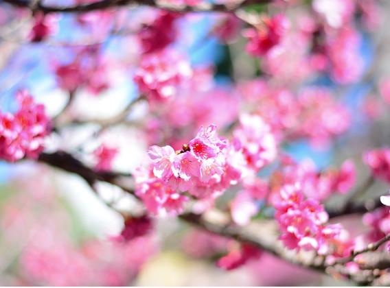 日本冲绳4晚5天百变自由行【初识冲绳/东航正班机/微笑品牌酒店】