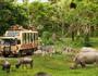 【奇妙动物夜】巴厘岛5晚7天半自助【1晚野生动物园/4晚当地海边五星/1日专属车导】