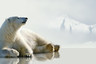 【探索北極,華人包船】北極斯瓦爾巴群島+羅孚敦群島 普朗修斯號7日游
