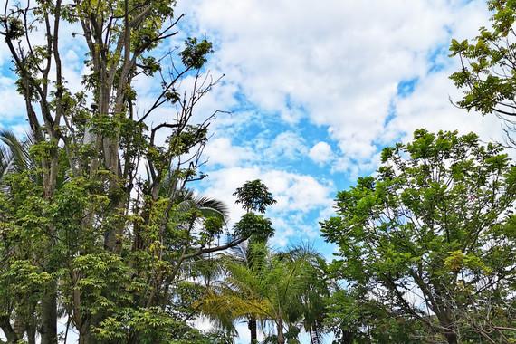 【亲子营】海南五指山热带雨林少年科考5日游【为蓝星球 雨林深处 野奢酒店】