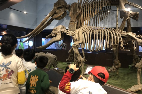 【中国古动物馆】夜宿博物馆,与恐龙做邻居